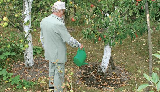 بهترین کود برای رشد سریع درختان میوه