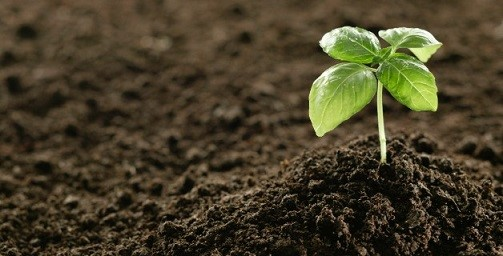 انجام آبشویی برای اصلاح شوری خاک